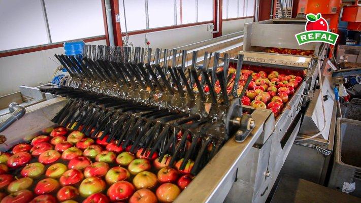 Główny produkt grupy Refal to jabłka deserowe.