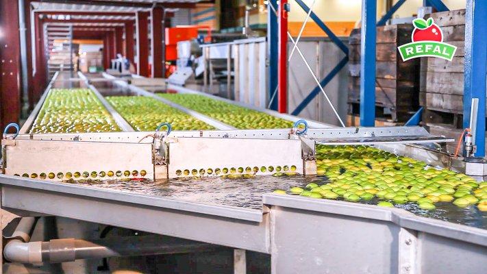 Nowoczesna linia do sortowania jabłek.