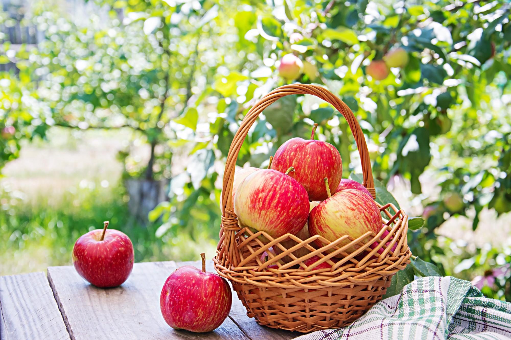 Nowoczesne zaplecze pozwala dostarczać nam jabłka deserowe najwyższej jakości